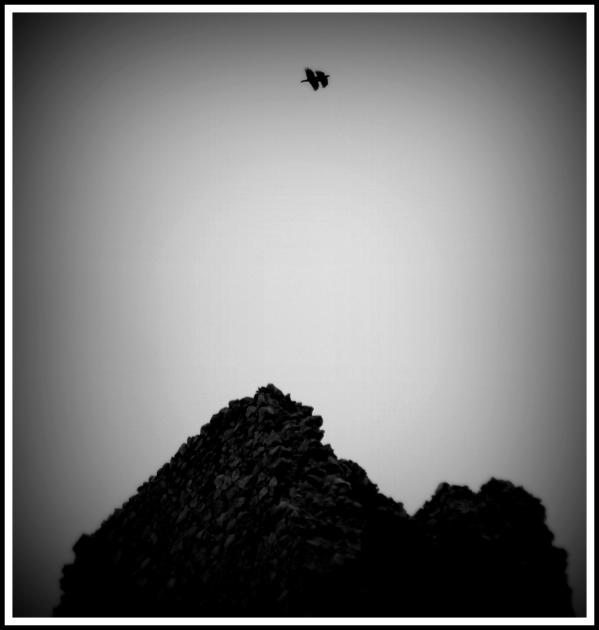 Τα πουλιά του Αγίου Ιλαρίωνα.