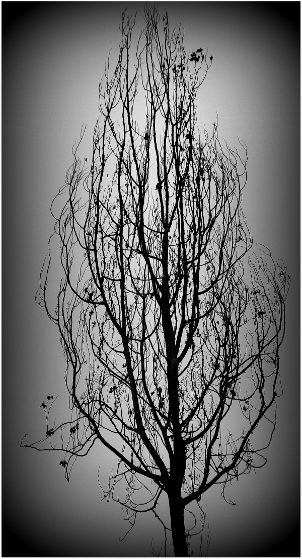 Αποτυχημένο δέντρο.