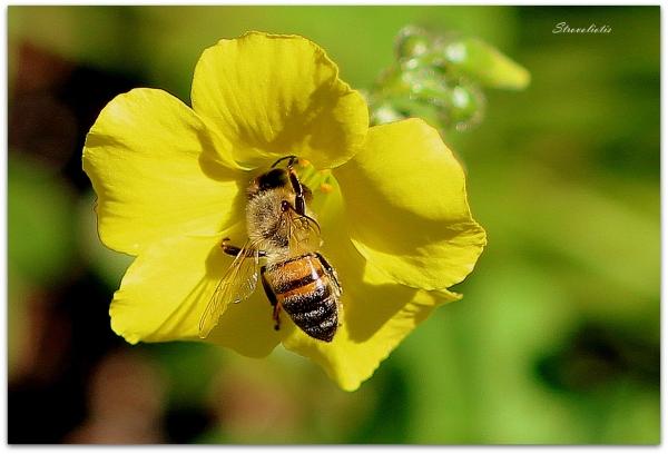 Εγώ, *δεν* είμαι η μέλισσα.